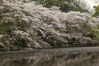鶴岡八幡宮、源平池