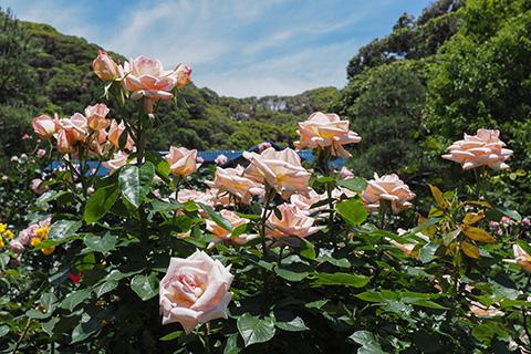 2019.05.22. Kamakura Bungaku-kan