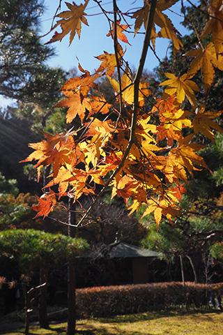2019.12.04. Ichijo-Ekan-Sanso