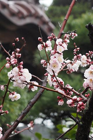 2020.02.16. Daigyoji