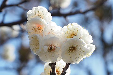 2020.02.02. Tsurugaoka Hachimangu