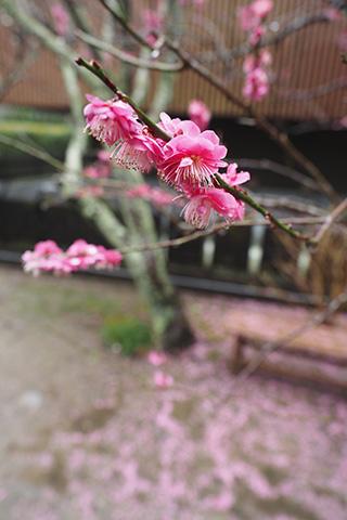 2020.02.16. Myohonji