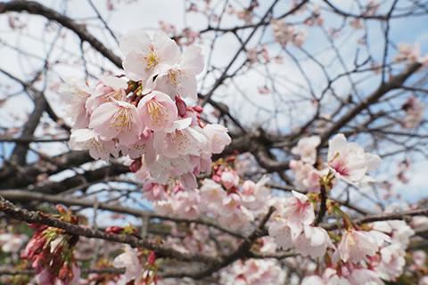 2020.03.01. Turugaoka Hachimangu