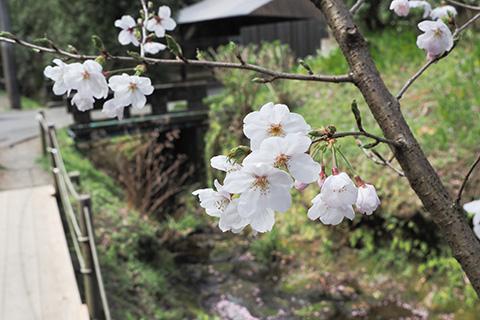 2020.03.22. Kitakamakura