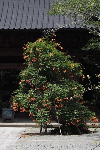 2020.07.12. Myohonji