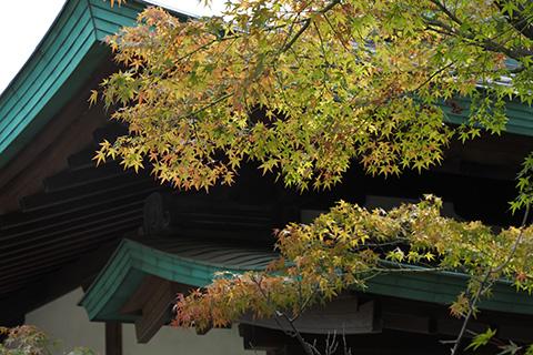 2020.10.04. Tsurugaoka Hachimangu