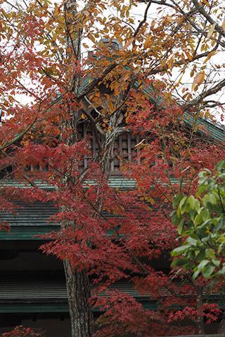 2020.12.02. Turugaoka Hachimangu