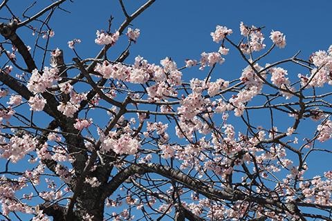 2021.03.03. Turugaoka Hachimangu